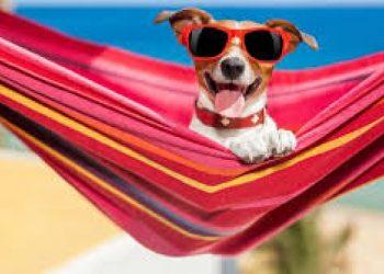 cane. vacanze-pensione