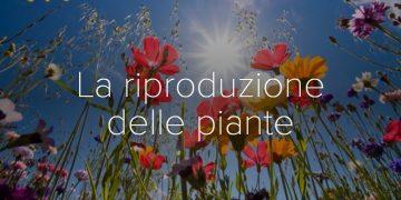 riproduzione-piante-guida