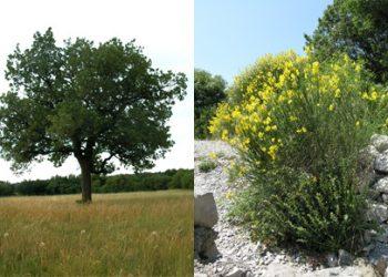 alberi-arbusti.caratteristiche