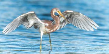 dove fare birdwatching in Sicilia