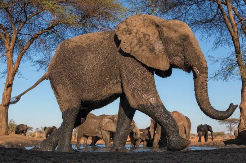 safari animali sudafrica