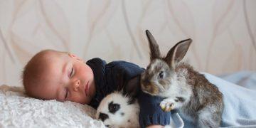 addestramento coniglio nano