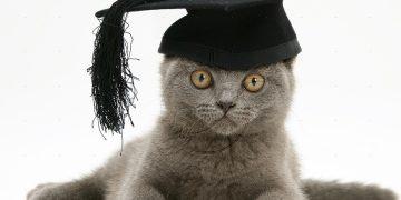 educazione gatto regole