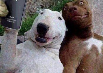 selfie-regole-tecniche-guide-online-it