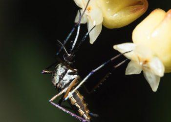 una zanzara da allontanare