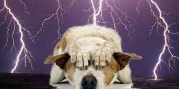 cane paura temporali