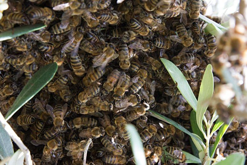 come rimuovere le vespe dal tetto