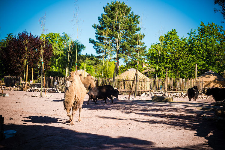 cammello zoo torino