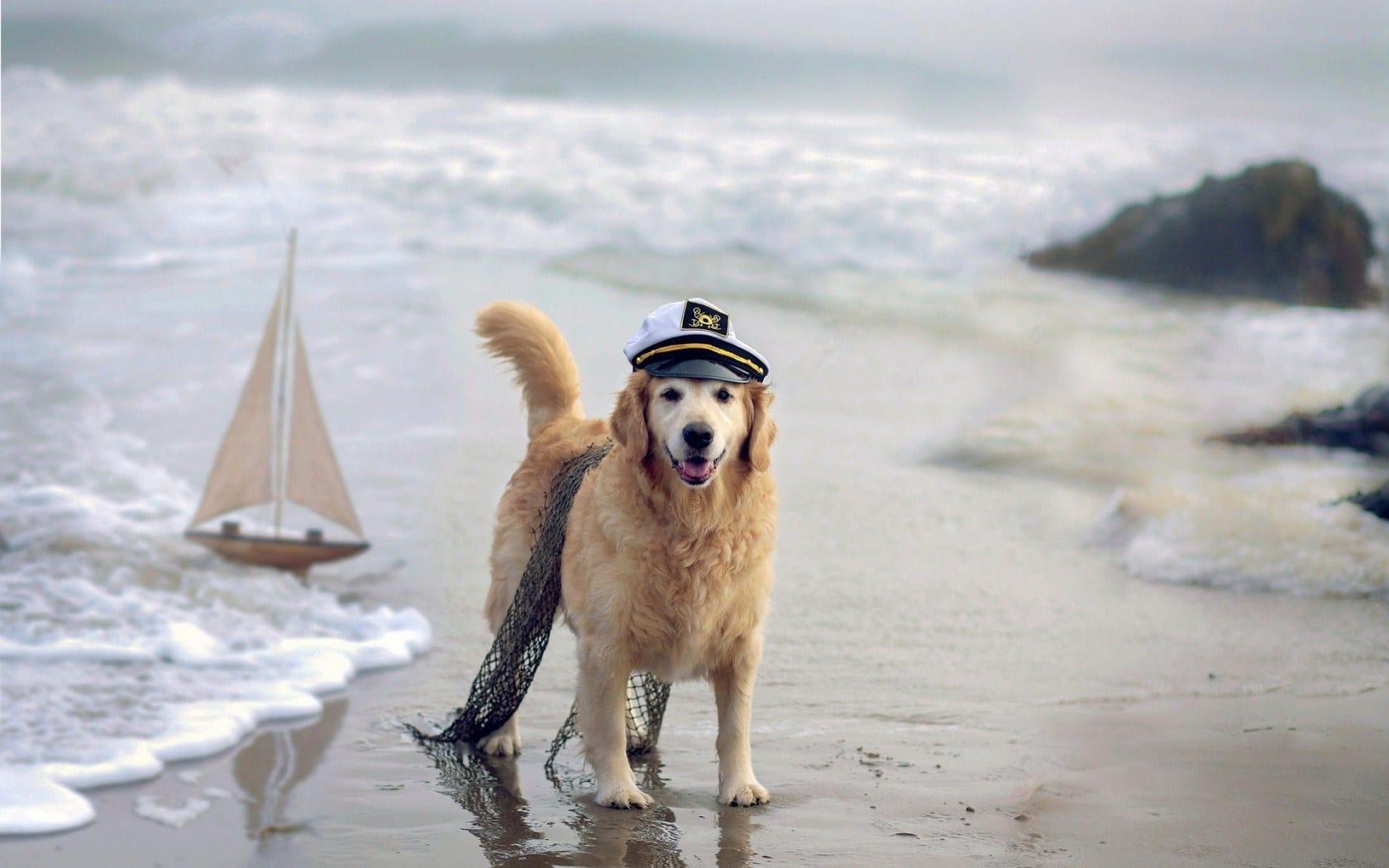 dove portare il cane in spiaggia