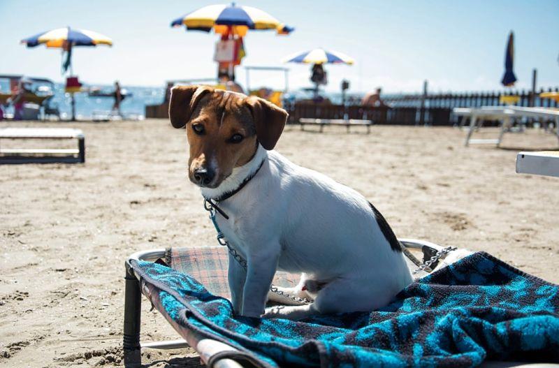 migliori spiagge cani liguria