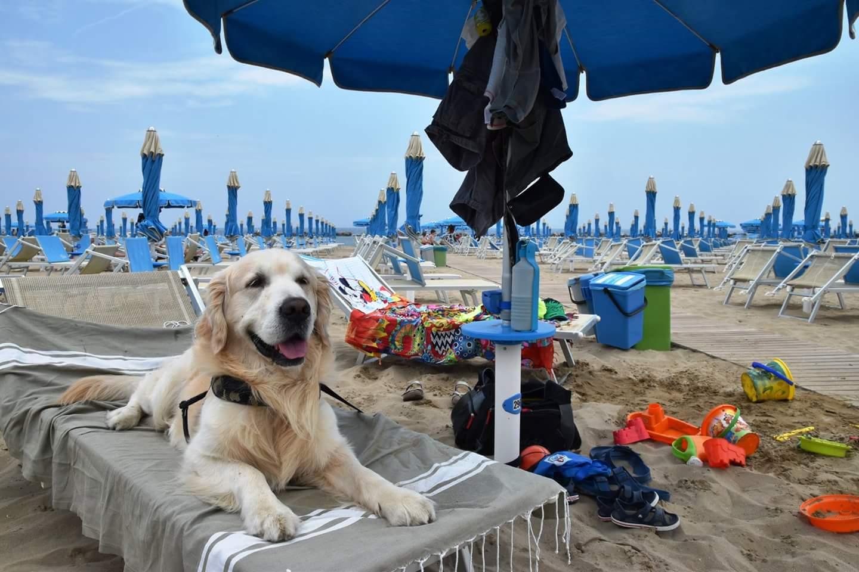 spiagge Liguria per cani
