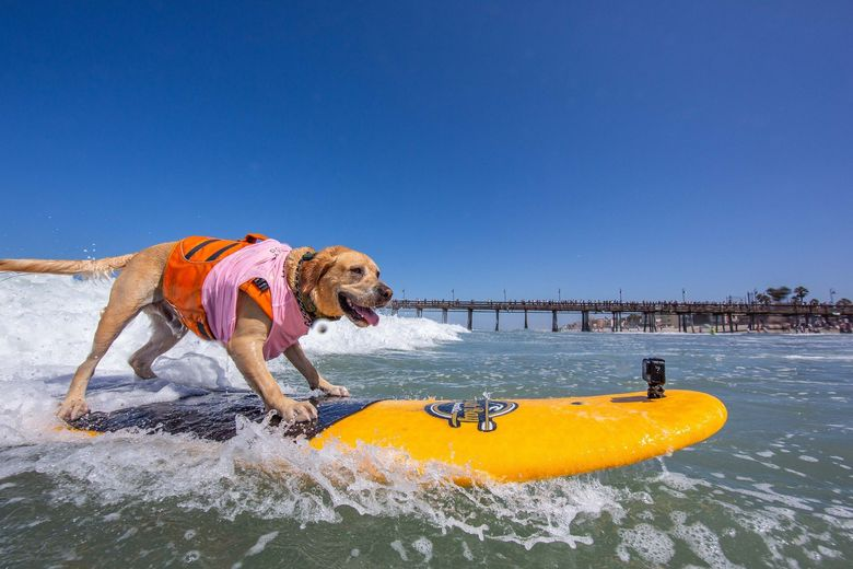 spiagge cani Alassio