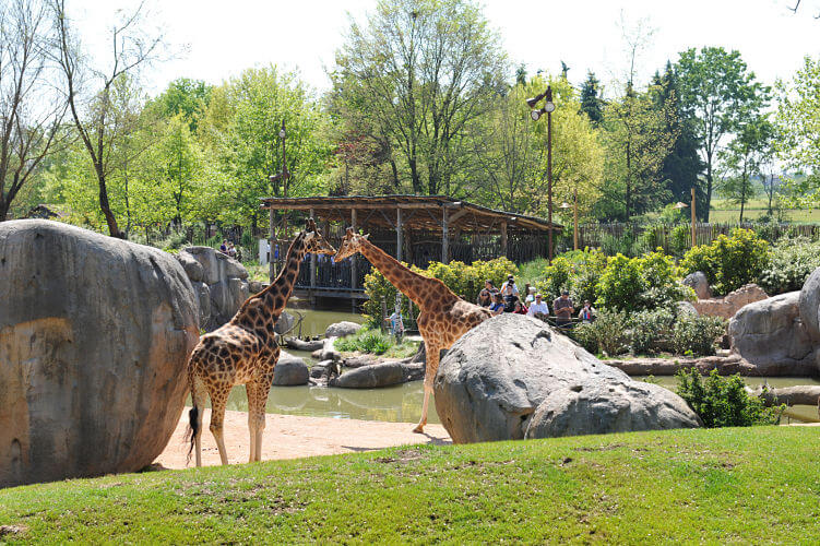 giraffe zoo torino