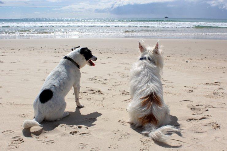 spiagge cani Bordighera