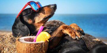 cane in spiaggia prende sole